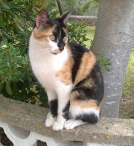 Katze auf Zaun vor Baum und Garten