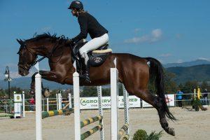 Pferd im Springparcours