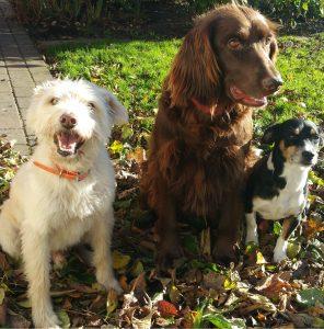 Verschiedene Hunde im Herbstlaub